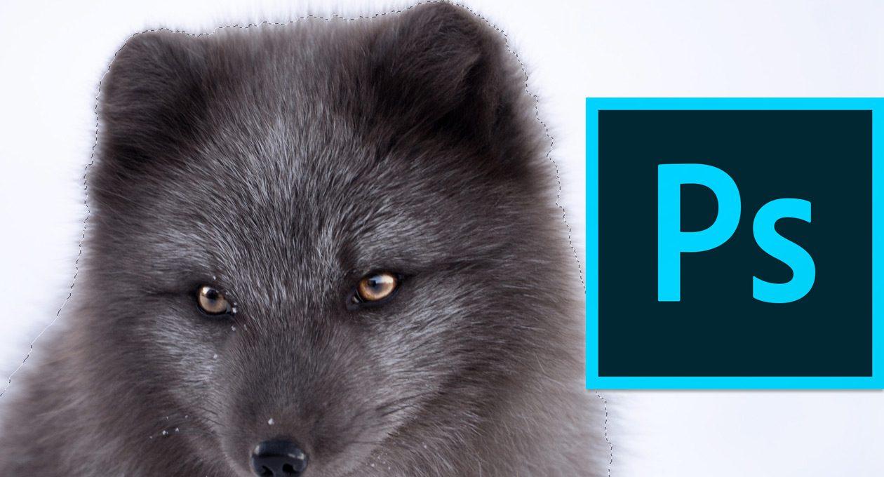 Update bringt automatisierte Freisteller für Photoshop CC